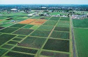 aeriel-view-cornfield-uiuc[1]