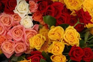 roses-300x200[1]