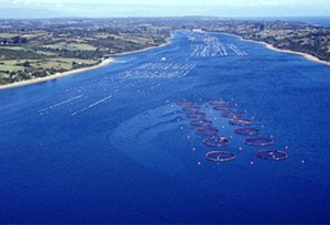 Salmon_farms_in_Chile_node_full_image_2[1]
