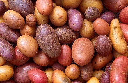 440px-Patates.jpg